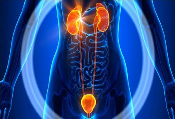 صورة نصائح وقائية للحد من التهاب المسالك البولية