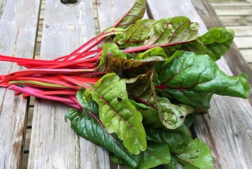 صورة نبات السلق| فوائد السلق