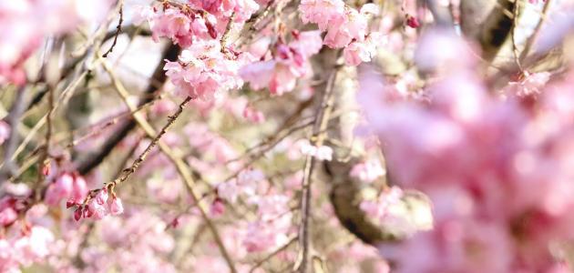 صورة الوقاية من الحساسية الربيعية