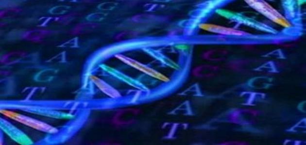 صورة ما المقصود بالشيفرة الوراثية