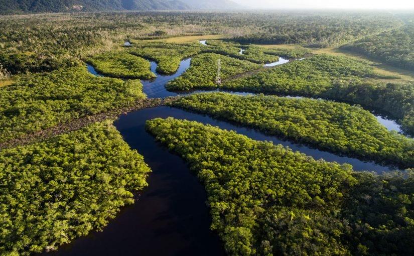 نهر الأمازون ويكيبيديا 13