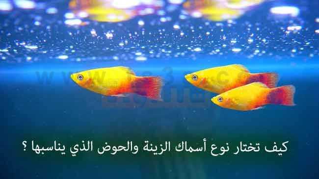 صورة كيف تختار نوع أسماك الزينة والحوض المناسب لها ؟!