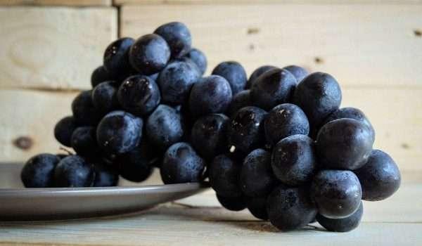 صورة العنب الأسود يحمى من أمراض القلب