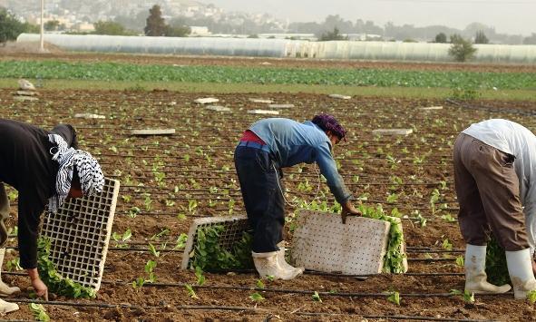 صورة لا زراعات صيفية في إربد حتى الآن