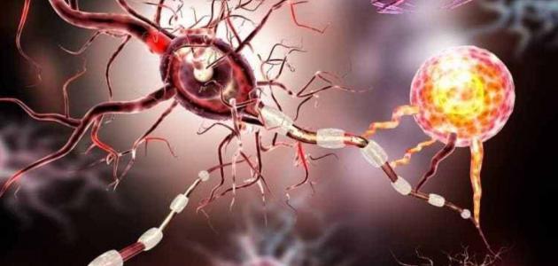 صورة أعراض التهاب الأعصاب في الرأس