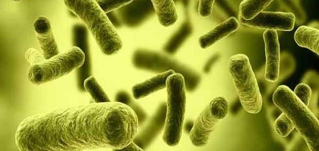 صورة أعراض بكتيريا إي كولاي في المهبل