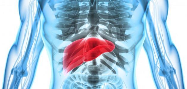 صورة أعراض وأسباب تضخم الكبد