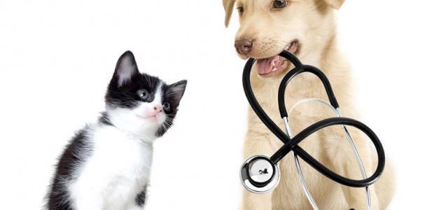 صورة أمراض الكلاب وكيفية علاجها