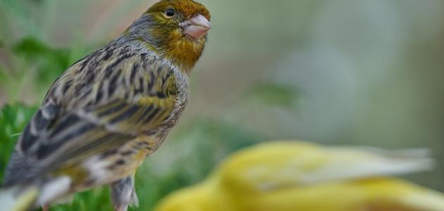صورة أنواع الطيور في الجزائر