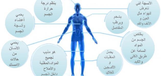 صورة أهمية الماء في جسم الإنسان