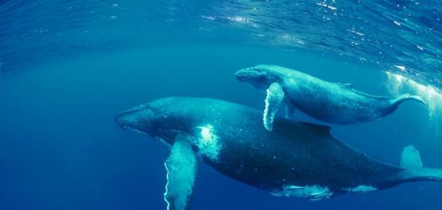 صورة بحث عن غرائب الحيتان