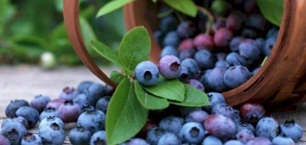 صورة طرق علاج التهاب الإحليل بالأعشاب: حقيقة أم خرافة قد تضرك؟