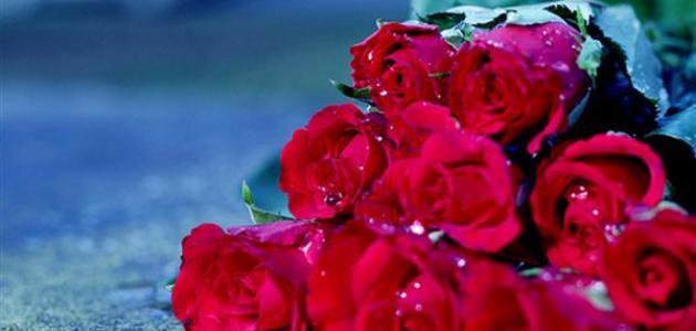 صورة كلام حب جميل ورومانسي