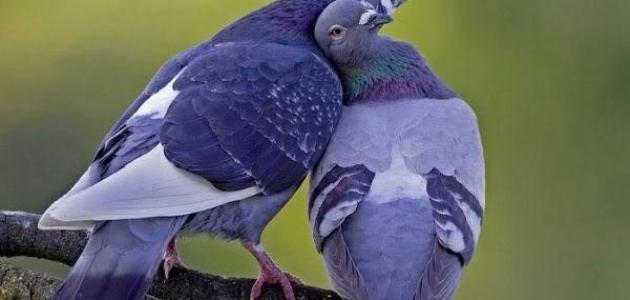 صورة كلام حب وغزل للزوج