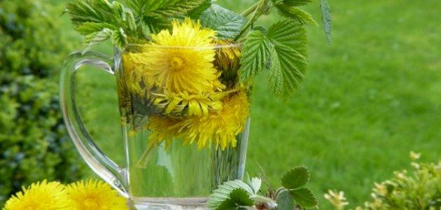 صورة هل يوجد علاج لنقص الحديد بالأعشاب؟ وما رأي العلم؟