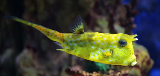 صورة أجمل سمكة في العالم