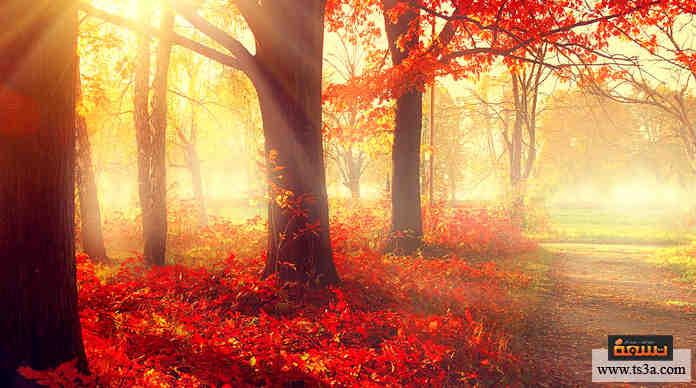 صورة كيف تكتشف أمراض فصل الخريف وتقي نفسك منها؟