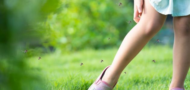 صورة طرق الوقاية من انتشار البعوض والدبور في فصل الصيف