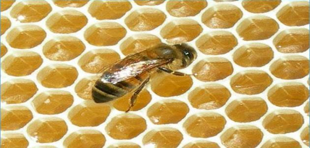صورة طريقة التخلص من خلية النحل