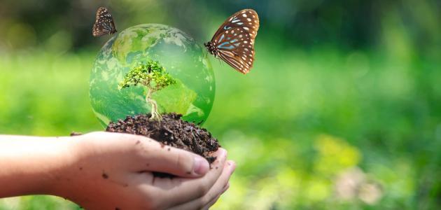 صورة كيف نحافظ على موارد البيئة