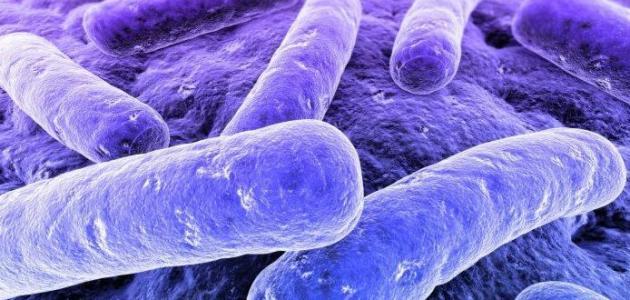صورة ما هي بكتيريا البول