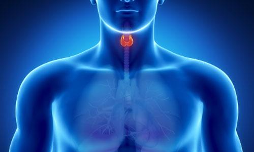 صورة اضطرابات الغدة الدرقية تؤثر على القلب