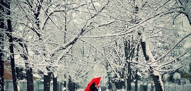 صورة كلمات جميلة عن الشتاء والمطر